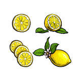 Vector Sketch Lemons With Leaves Flower And Slices Royalty Free Stock Photography