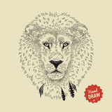 Vector sketch of a lion face. Lion head, front view Stock Photos