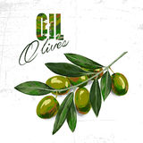 Vector sketch of olive tree branch Stock Image