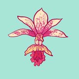 Vector sketch orchid Royalty Free Stock Photo
