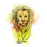 Vector sketch by pen of a lion head  on a background of colored. Sketch by pen of a lion head  on a background of colored watercolor stains Stock Photography