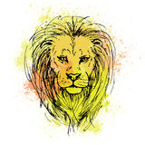 Vector sketch by pen of a lion head  on a background of colored. Sketch by pen of a lion head  on a background of colored watercolor stains Stock Photos