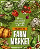 Vector sketch poster for farm market vegetables. Vegetables and fresh veggies sketch poster for vegetable farm market. Vector natural organic pumpkin Royalty Free Stock Images