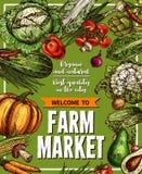Vector Sketch Poster For Farm Market Vegetables