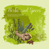 Vector sketch poster of spices and herbs Royalty Free Stock Photos