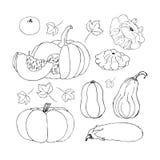 Vector Sketch Pumpkin. Doodle pumpkins. Hand drawn ink illustration Royalty Free Stock Photos