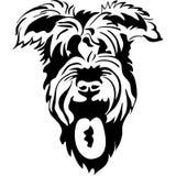 vector Sketch of purebred dogs Schnauzer Stock Photo