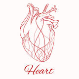 Vector sketch of the real heart Royalty Free Stock Photo