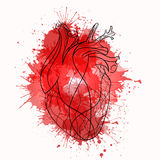 Vector sketch of the real heart of the red lines Stock Images