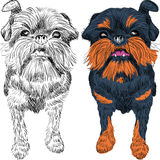 Vector sketch red dog Brussels Griffon breed Royalty Free Stock Photo