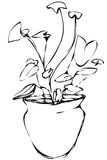 Vector sketch room Syngonium flower in a pot Royalty Free Stock Photo
