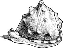 Hand drawing of a big sea shell royalty free illustration