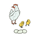 Vector sketch set coloured isolated illustration of farm birds. Breeding laying hens and chicks, eggs. Stock Images