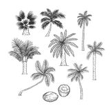Vector sketch set of palm. Different kinds of tropical trees and coconut. Contour black illustration isolated on white. Background stock illustration