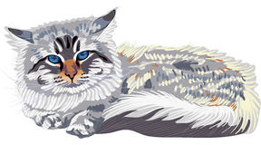 Vector Sketch Siberian Cat Color-point (Neva Masqu Royalty Free Stock Photography