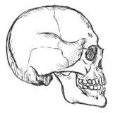 Sullen Skull Sketch Symbol For Tattoo Design Stock Vector