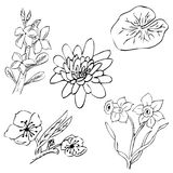 Simple sketch of cherry, lotus, frangipani, daisy flower. Vector sketch of simple sketch of cherry, lotus, frangipani, daisy flower stock illustration