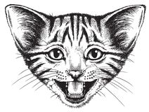 Vector sketch of a small kitten meowing. A sketch of a small baby kitten meowing. Vector illustration royalty free illustration