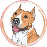 Vector sketch smiling dog American Staffordshire Terrier breed stock photography