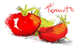 Vector sketch tomato illustration - slice tomatoes and salad Royalty Free Stock Photography