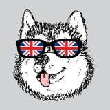 Husky dog portrait. Vector sketched portrait of cute baby husky dog stock illustration