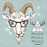 Vector sketchy illustration. Hand Drawn Portrait of hipster goat Royalty Free Stock Images