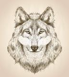 Vector Skizzenillustration einer Vorderansicht des Wolfkopfes Lizenzfreie Stockfotos