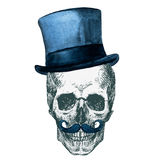 Vector Skull. Beautiful vector image with nice skull with watercolor elemnts Royalty Free Stock Photo
