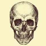 Vector Skull Royalty Free Stock Photos