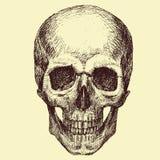 Vector Skull Royalty Free Stock Photos