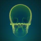 Vector skull hologram. Digital danger. Futuristic technology virus illustration Stock Photos
