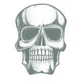 Vector skull illustration Stock Photos