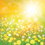 Vector of sky background with yellow dandelions. Royalty Free Stock Image