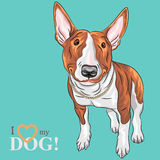 Vector smiling cartoon Bull Terrier Dog breed. Color sketch of cheerful smiling Excellent Bull Terrier Dog in black and tan isolated on the white background Stock Photos