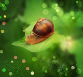 Vector snail crawling on the green leaf Stock Image