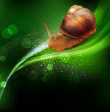 Vector snail crawling on the green leaf. The vector snail crawling on the green leaf Stock Images