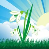 Vector snowdrops. Vector illustration of snowdrops under the light of the spring sun Stock Photo