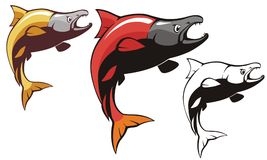 Salmon Sockeye Fish Vector. Vector of Sockeye Salmon fish in two alternative color  modern & retro  for your logo or graphic design Stock Photography