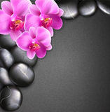 Vector spa background with stones and orchids Royalty Free Stock Photos