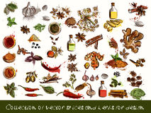 Vector spices and herbs chili, vanilla, curry, mint, dill, parsl Stock Images