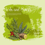 Vector spices and herbs seasonings poster Stock Photos