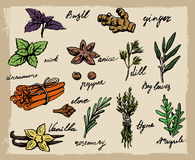 Vector spices and herbs Stock Photography