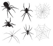 Vector Spider Illustrations. Vector Spiders and Spider Web Royalty Free Stock Images