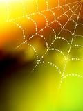 Vector spider web illustration Royalty Free Stock Photos