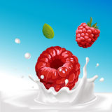 Vector splash of milk with raspberry - illustration Royalty Free Stock Photos