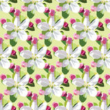 Vector Spring Apple or Cherry flowers blossom pattern Royalty Free Stock Photos