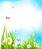 Vector spring background. With beautiful flowers and butterflies Royalty Free Stock Image