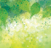 Vector  spring background. Stock Images