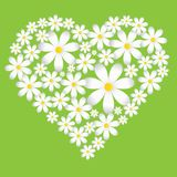 Vector spring background with camomiles. Heart made of chamomile vector illustration