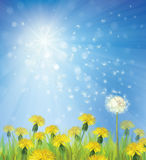 Vector of spring background with dandelions. Stock Photo